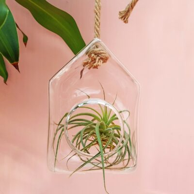 house glass terrarium
